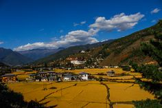 Autumn is coming!😍 Come to Bhutan and enjoy the autumn colors of golden rice fields ready for harvest. Who would you bring with you?
