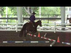 Maine Quarter Horse Show ( Part-8 )    Check out the most popular thoroughbred breed  in this American Quarter Horse Competition.