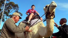 Imhoff Farm - Camel rides  14 Holiday Things To Do With Kids In Cape Town