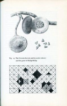 Leo Lionni's amazing imaginary botony drawings