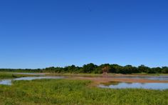 Parque Nacional El Impenetrable » Chaco, Argentina