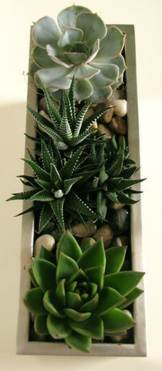 Se llaman en Inglés SUCCULENT PLANTS.  Deben ser fáciles de cuidar.  Easy to grow collection and planted correctly