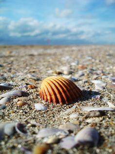 Пляж, Оболочка, Песок, Море