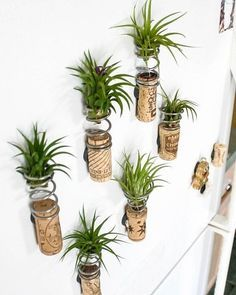 More creative planter ideas -- this time it's reusing wine corks. Looks great with small ionanthas!