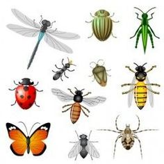 What is the difference between beneficial insects and pests in the garden?