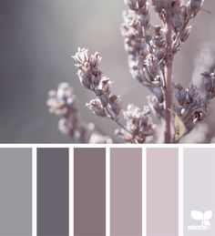 Color Spring Color Spring Design Seeds Color Palettes Posted Daily For All Who Love Color Inspiration And Ideas For A Decorating Colour Palette In Soft Pinky Grey