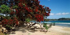 onetangi beach - Google Search