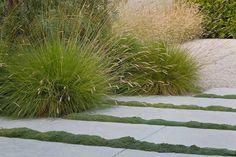 landscape designer Bernard Trainor---- Fields of Vision: Nature Glorified Plant Design, Garden Design, Paved Patio, Felder, Landscaping Plants, Landscaping Ideas, Ornamental Grasses, Landscape Architecture, Landscape Designs