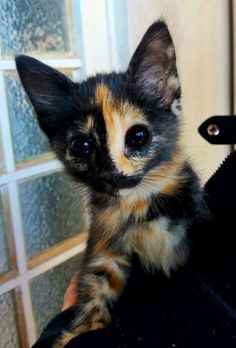 """I had a kitten like this one way back in the 70's. Her name was """"Strawberry""""."""