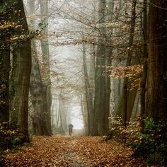 Ride through those leaves! From oer-wout.deviantart.com.
