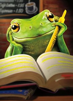 Image result for frog studying library reading with pencil pic
