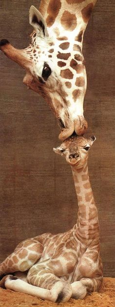 now trending : giraffes are everywhere - This is Glamorous