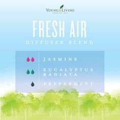 Young Living essential oil diffuser blend with Jasmine Jasmine Essential Oil, Jasmine Oil, Young Living Oils, Young Living Essential Oils, Essential Oil Diffuser Blends, Aromatherapy Diffuser, Instagram, Diffuser Recipes, Yl Oils