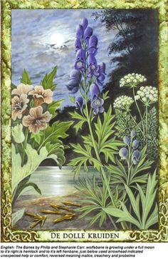 the banes druid plant oracle deck