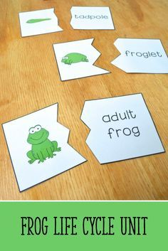 Frog life cycle puzzles - kids can read the steps in the life cycle and put together the puzzles! {from the Frog Life Cycle Mini-Unit for Pre-K, K, and 1st Grade Science, Kindergarten Science, Teaching Science, Teaching Ideas, Teaching Materials, Teaching Displays, Teaching Plants, Primary Teaching, Student Teaching