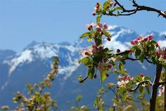 Frühling in Italien http://www.wellnessurlaub.it/