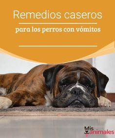 Remedios caseros para los perros con vómitos  ¿Su perro ha empezado a vomitar recientemente? ¿No come y todo le sienta mal? Descubra algunos remedios caseros para los perros con vómitos.