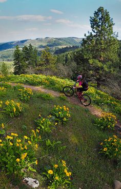 Hood River Mountain Bike Adventures, Mountain Bike Guide and Photographer, Bike Tour Hood River Oregon