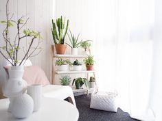 ②大きめの観葉植物 グリーンポット
