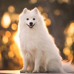 5 Tips for the BEST Winter Dog Photos | Pretty Fluffy | Pretty Fluffy
