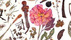 botanical artist Rachel Pedder-Smith will discuss her Herbarium Specimen Painting at the Kew Gardens.