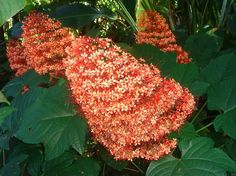#Starwood Hawaii Dream Vacation   Hawaii Tropical Botanical Garden