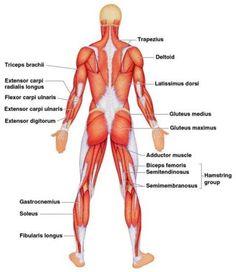 Muscles Sensative facial