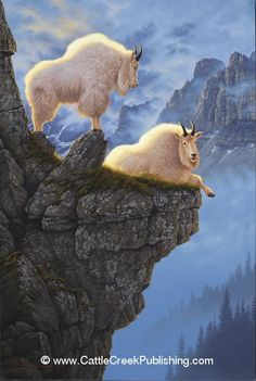 Rocky Mountain goats ~ Rock Solid by Tom Mansanarez