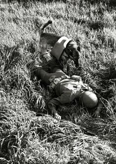Animals, War and Conflict, pic: June 1943, A rescue dog on a mercy mission, the dog is trained to search and find a 'wounded' soldier.