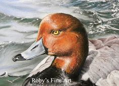 Pastel Redhead Duck Painting. Wildlife Art by Roby Baer