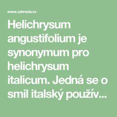 Helichrysum angustifolium je synonymum pro helichrysum italicum. Jedná se o smil italský používaný jako koření a náhrada za smil písečný, který se používá na čaj při žlučníkových obtížích. bylinář Vladimír