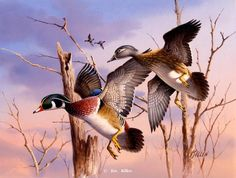 "Flying High"" Woodducks Original Watercolor in Private Collection"