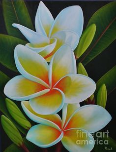 Plumeria Metal Print by Paula Ludovino. All metal prints are professionally printed, packaged, and shipped within 3 - 4 business days and delivered ready-to-hang on your wall. Choose from multiple sizes and mounting options. Hawaiian Art, Hawaiian Flowers, Tropical Flowers, Art Floral, Plumeria Flowers, Flower Art, Beautiful Flowers, Watercolor Paintings, Art Drawings