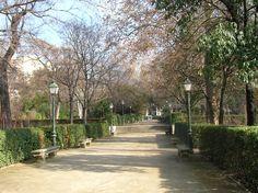 Real Jardín Botánico.  #jardinbotanico #Madrid
