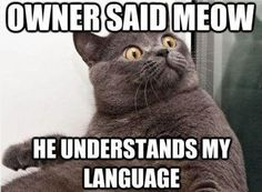 "Don't ""talk"" to your cats. They can't understand you and even if they COULD they WOULDN'T care! You just look crazy."