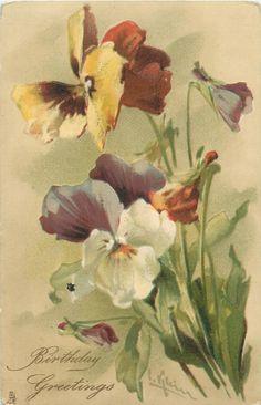 BIRTHDAY GREETINGS  multicoloured pansies