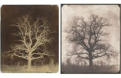 An oak tree in winter, c.1842-43 by William Henry Fox Talbot (Calotype negative and salted paper print)