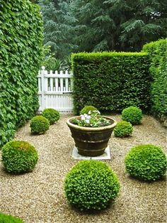 Buxus spheres planted into a graded pebble courtyard with subtle water feature and hedges. Traditional courtyard garden design with a contemporary twist. Pinned to Garden Design - Courtyards by Darin Bradbury. Boxwood Garden, Topiary Garden, Topiaries, Pea Gravel Garden, Garden Hedges, Boxwood Hedge, Cacti Garden, Back Gardens, Small Gardens