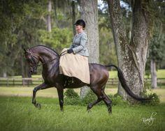 Sidesaddle on black Arabian Rohara Marcus | Rohara Arabians