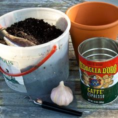 Growing garlic indoors is easy and a great project for kids—plus, you get to eat the tasty greens!