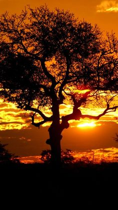 Sunset in Kruger National Park, South Africa Beautiful World, Beautiful Places, Out Of Africa, Kruger National Park, Photos Voyages, Beautiful Sunrise, Jolie Photo, Parcs, Africa Travel