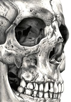 Skull No. 1. Art Print by Lhayton