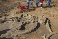 Texas family to part ways with skeleton of mammoth found on its farm - Yahoo News