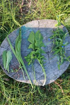 Weeds – How to forage for free superfoods.   Many weeds are healthier than the greens you can buy from the greengrocers.   Here's an overview of the benefits of eating weeds and weedy superfoods for beginner foragers. I recommend beginner foragers start with these easy to recognise weeds: Dandelion, Chickweed, Purslane, Fat Hen/Lamb's Quarters, Scurvy weed, Sowthistle, and Stinging nettle.