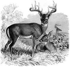Výsledkom obraz pre perokresba zvieratá
