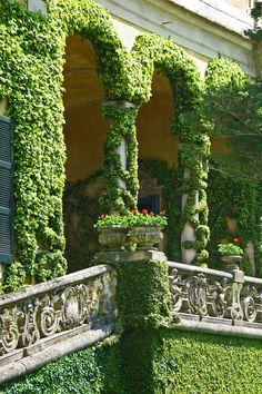 Ivy balcony