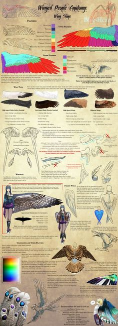 Winged People Anatomy: Wing Design by Blue-Hearts.deviantart.com on @DeviantArt