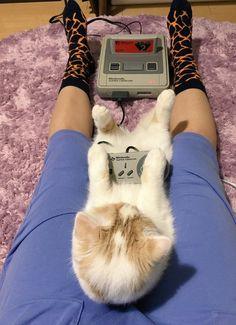 MOTHER2をプレイする猫wwwwww