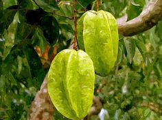 Delicious Star Fruit