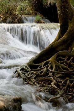 Waterfall Root,Laos  Más Información del Turismo de Navarra España: ☛  #NaturalezaViva  #TurismoRural  ➦   ➦ www.nacederourederra.tk  ☛  ➦ http://mundoturismorural.blogspot.com.es   ☛  ➦ www.casaruralnavarra-urbasaurederra.com ☛  ➦ http://navarraturismoynaturaleza.blogspot.com.es  ☛  ➦ www.parquenaturalurbasa.com ☛   ➦ http://nacedero-rio-urederra.blogspot.com.es/